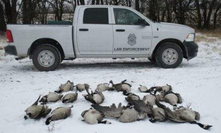 Kansas Game Wardens Looking for Someone Who Dumped 18 Geese and Left Them to Rot