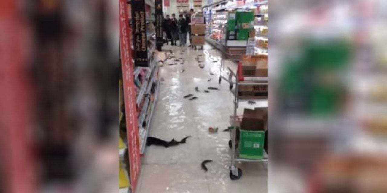 Live Fish Invade Supermarket Aisles