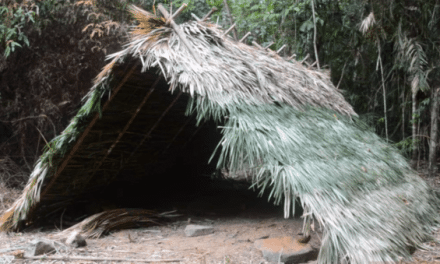 Primitive Technology: How to Build an Elaborate A-Frame Hut with Stone Age Tools