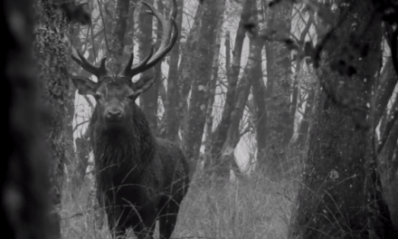 Red Stag Engages in Staredown as Hunt Comes to an Emotional End