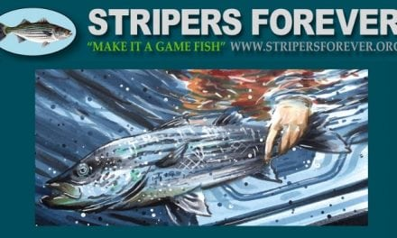 Stripers Forever Fund-Raising Auction
