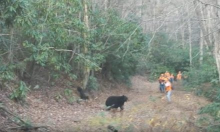 You Need to See This Tennessee Bear Hunt with Hounds