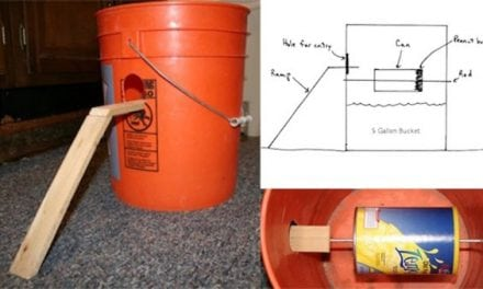 8 Genius Mouse Traps You Can Make at Home