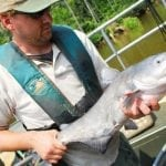 Chesapeake Plagued By Bay Blue Catfish