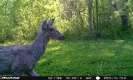 Deer Molting: When and Why Deer Lose Their Hair