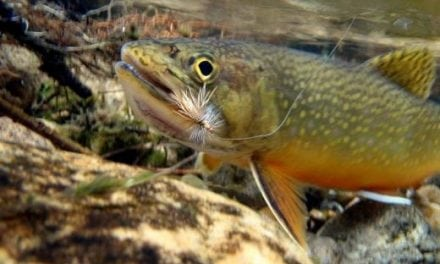 Restoring Virginia Brook Trout Habitat By Trout Unlimited Works