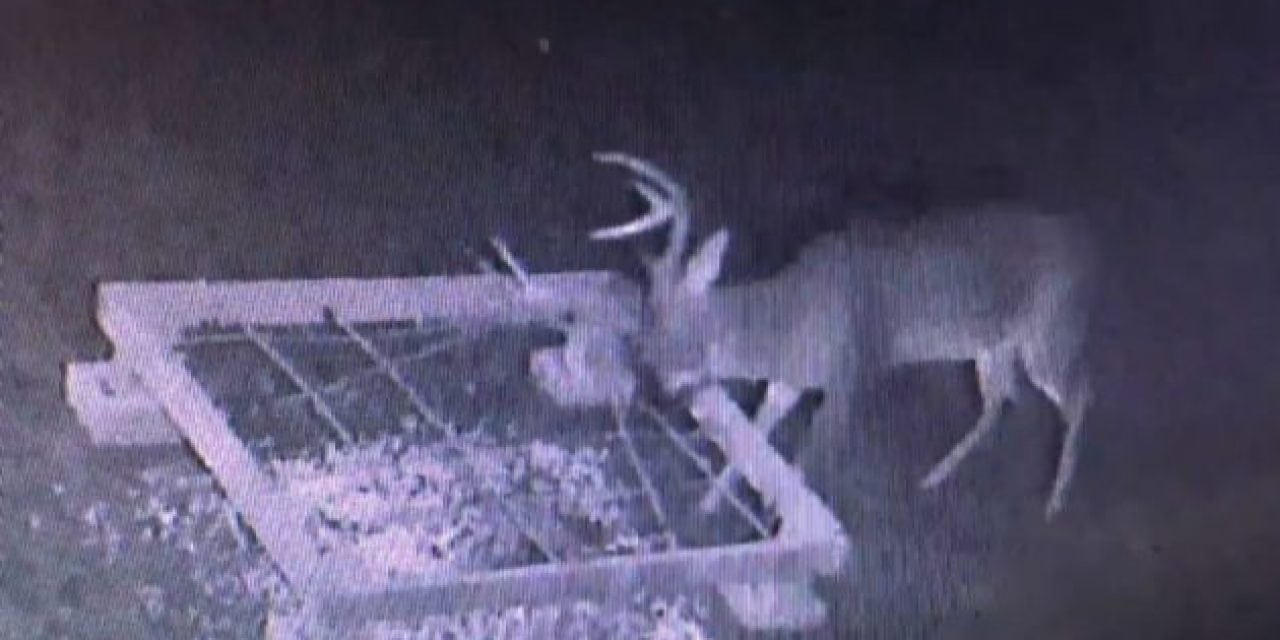 Video: Do Antler Traps Work? This One Did and Here's the Video to Prove It
