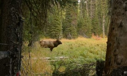 Video: Epic Elk Hunt Will Have You on the Edge of Your Seat