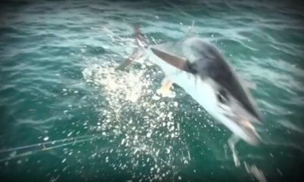When Mackerel Fly: Aggressive King Follows the Lure Right Into the Boat, Takes Out Camera