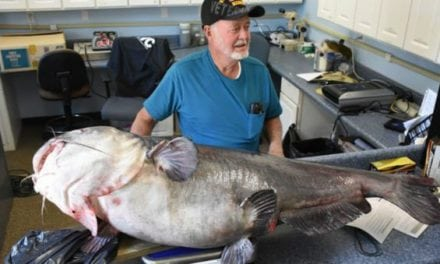121-Pound Blue Catfish is Biggest in State, But Won't Make Record Book