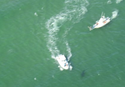 From a few thousand feet above, boats circle in on a white shark