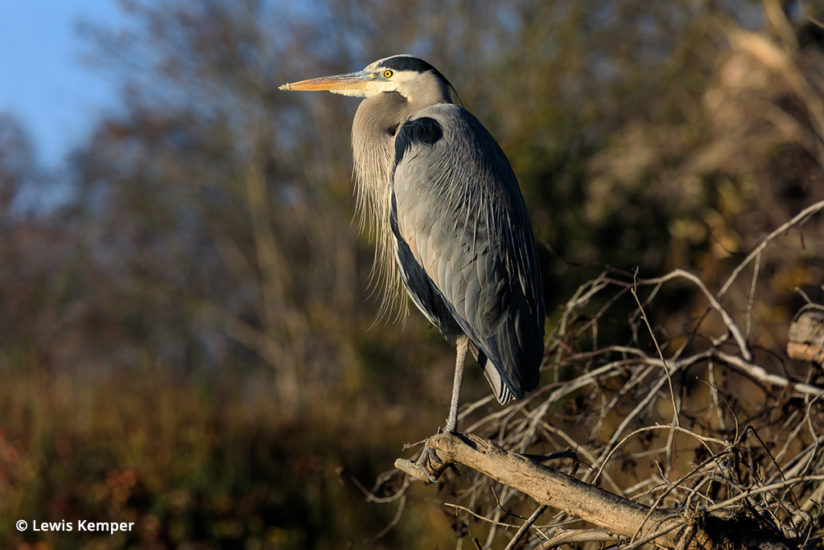 The Tamron 100-400m is great for wildlife photography.