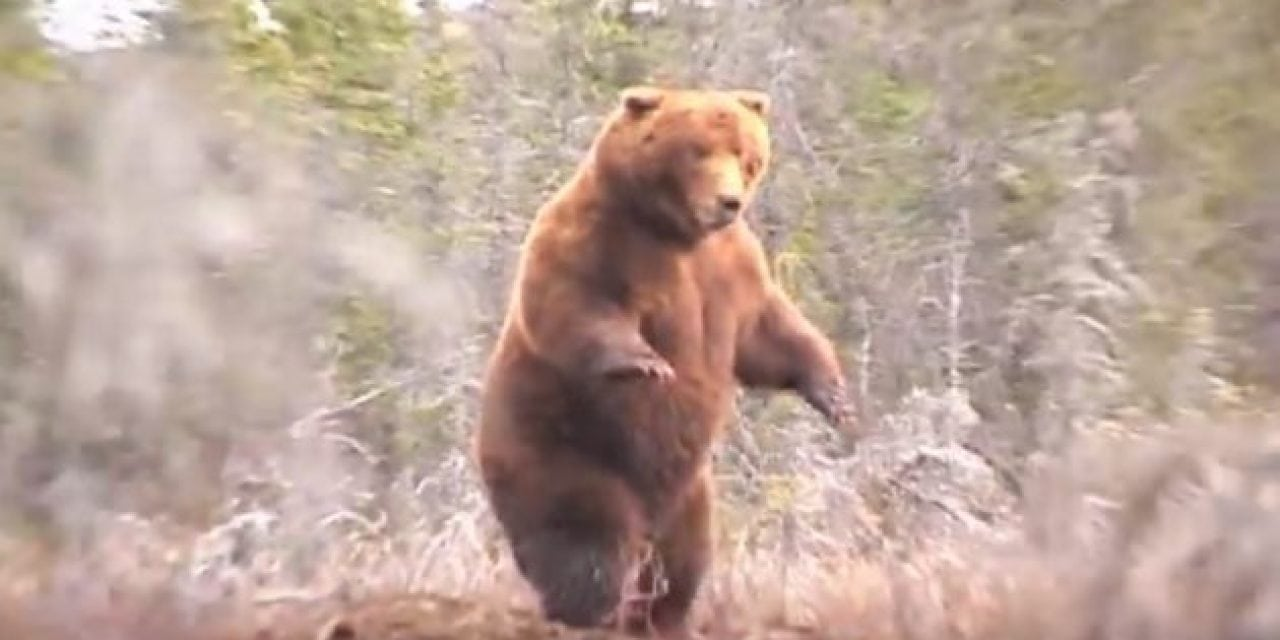 Remember the Hunt for This Record Alaska Brown Bear?