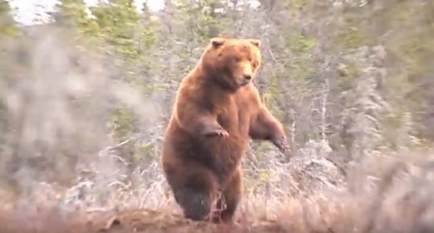 Watch As Jack Brittingham Arrows The Pope & Young World Record Alaska Brown Bear On This Intense Hunt