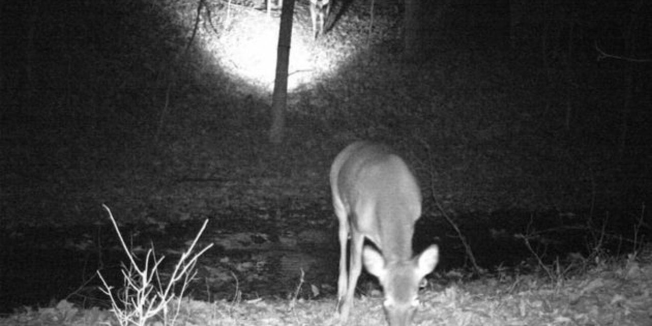 Image result for trail camera captures
