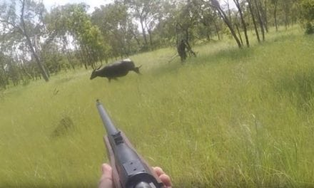 You Need to See This Intense Water Buffalo Charge in Australia