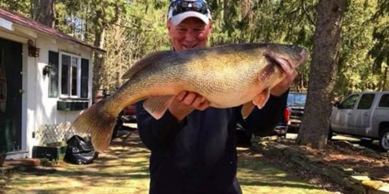 Big Walleye Could Be New Record for New York
