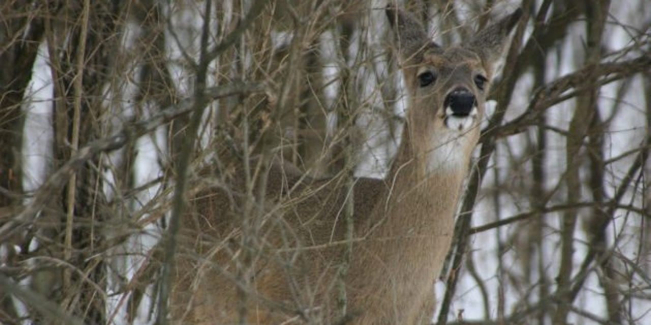 Michigan Bills Aim to Curb the Impact of CWD