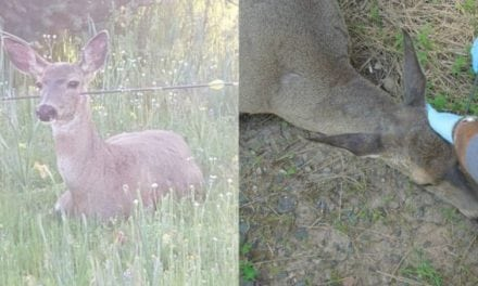 Oregon Officials Remove Arrows from Two Deer, Poachers Responsible Still at Large