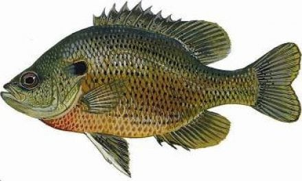 Panfish Fishing Tips From Florida Fish and Wildlife