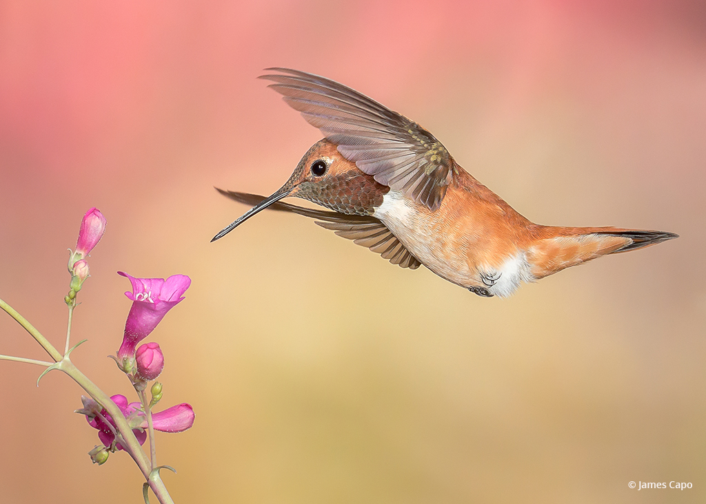 "Today's Photo Of The Day is ""For the Love of Nectar"" by James Capo."
