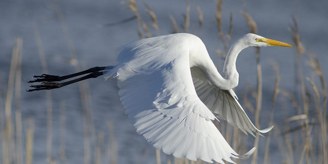Photo Of The Day By Richard Slack