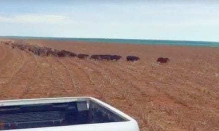 This Country-Mile-Long Line of Wild Hogs Will Blow Your Mind