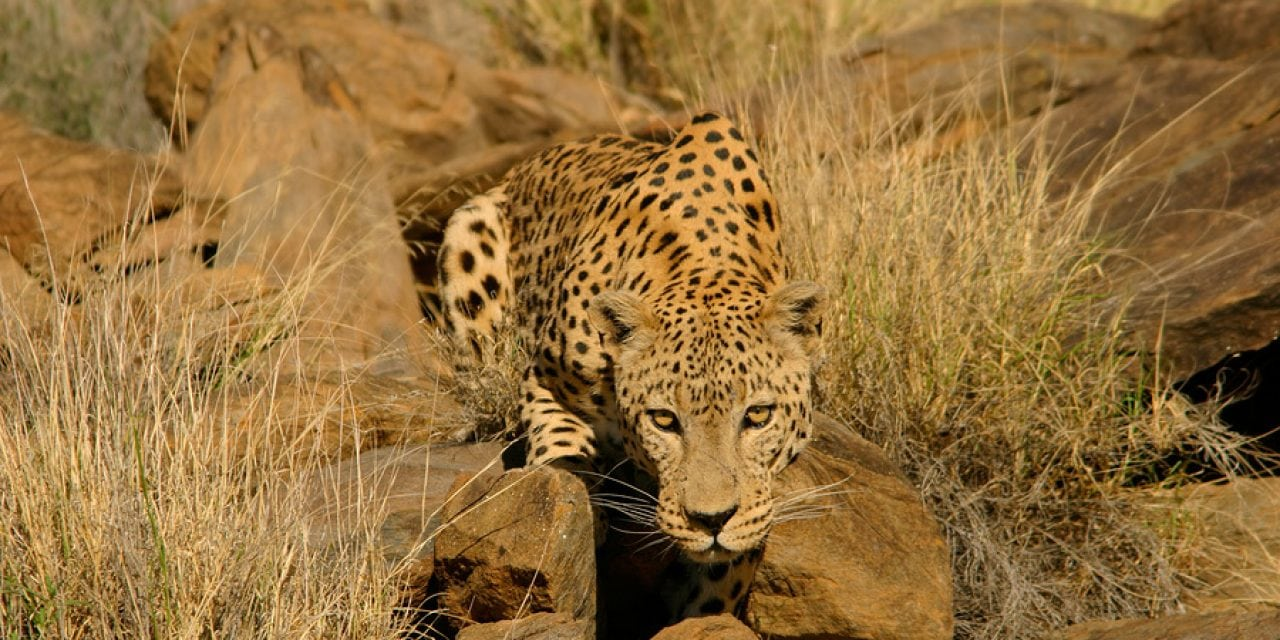 Top 5 Calibers for Hunting Big Game in Africa