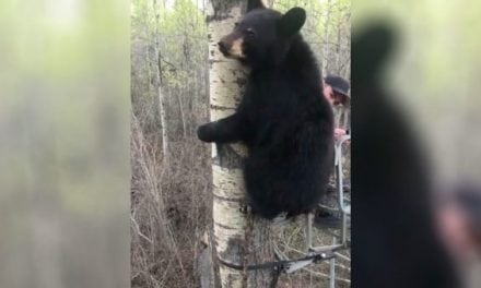 Young Bear Greets Young Hunter in Viral Video