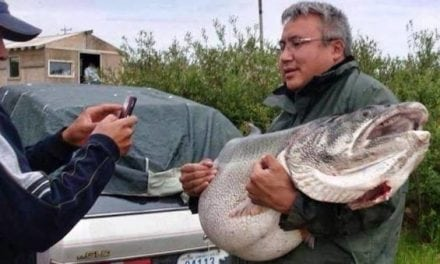 83-Pound Netted Lake Trout is a Merciless Tease for Sport Anglers