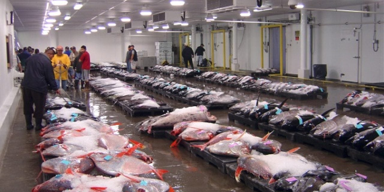 Clues at Fish Auction Reveal Several New Species of Opah