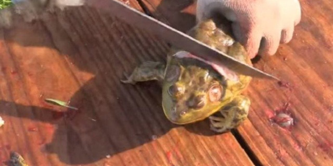 How to Clean Frogs for the Table the Easy Way