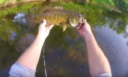 How to Fish Public Streams for Bronzebacks With Ultra-Light Gear
