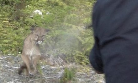 Jim Shockey's First-Person Account of Being Attacked By a Cougar
