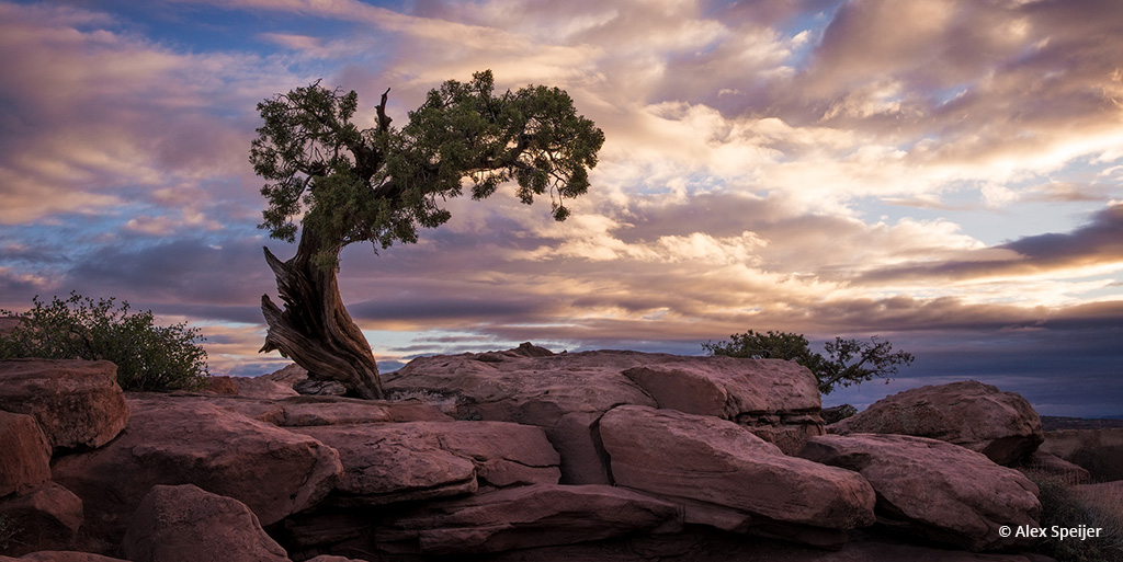 "Today's Photo Of The Day is ""Sunrise Solitude"" by Alex Speijer. Location: Dead Horse Point State Park, Utah."