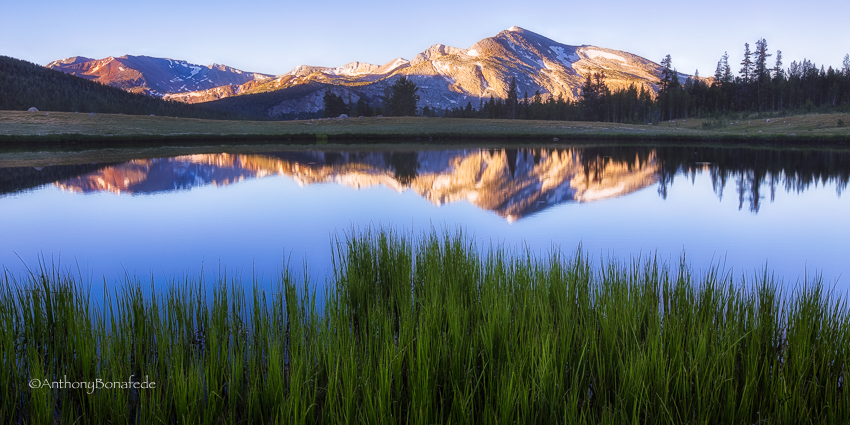 "Today's Photo Of The Day is ""Meadow Sunrise"" by Michael Bonafede. Location: Yosemite National Park, California."