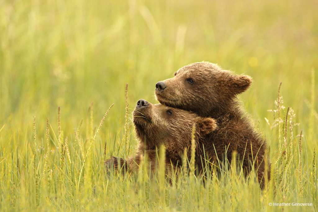"Today's Photo Of The Day is ""Best Friends"" by Heather Genovese. Location: Lake Clark National Park, Alaska."