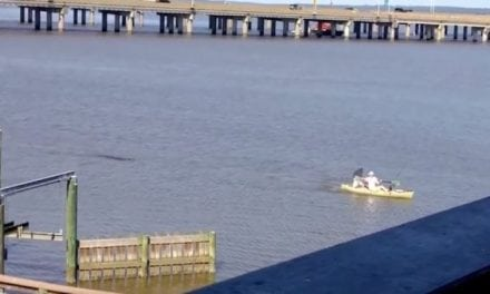 Video: Alligator Chases Alabama Kayaker