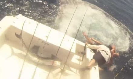 Video: Sailfish Jumps in Boat, Fishermen Jump Out