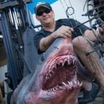 Video: The 809-Pound, World-Record Mako Shark Taken by Bow