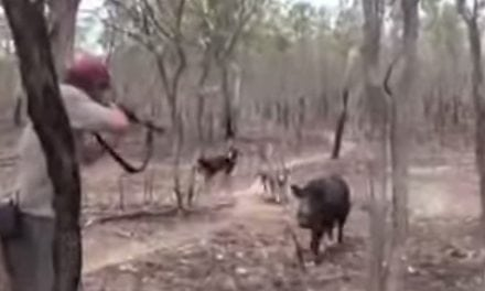 Video: When a Hog Hunt Goes South