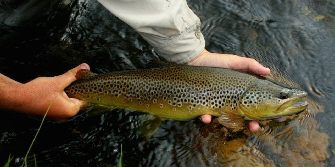18 Best Trout Streams in the Western U.S. and Canada
