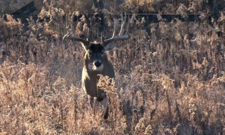 4 of the Best Deer Hunting YouTube Channels
