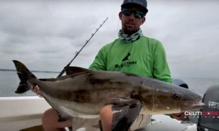 BlacktipH Lands a Giant Cobia in Chesapeake Bay