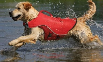 Boating safety for you and your pet