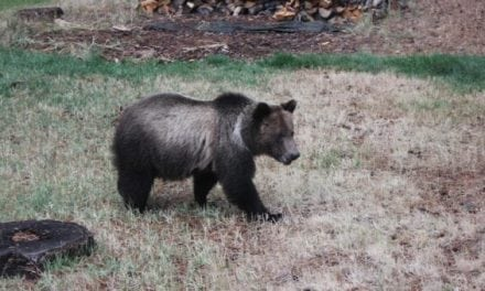 Here's How Anti-Hunters are Planning to Disrupt the Wyoming Grizzly Bear Hunt