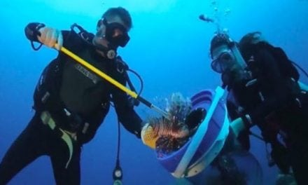 Lionfish Removal in Florida Now Comes With a $5,000 Bounty