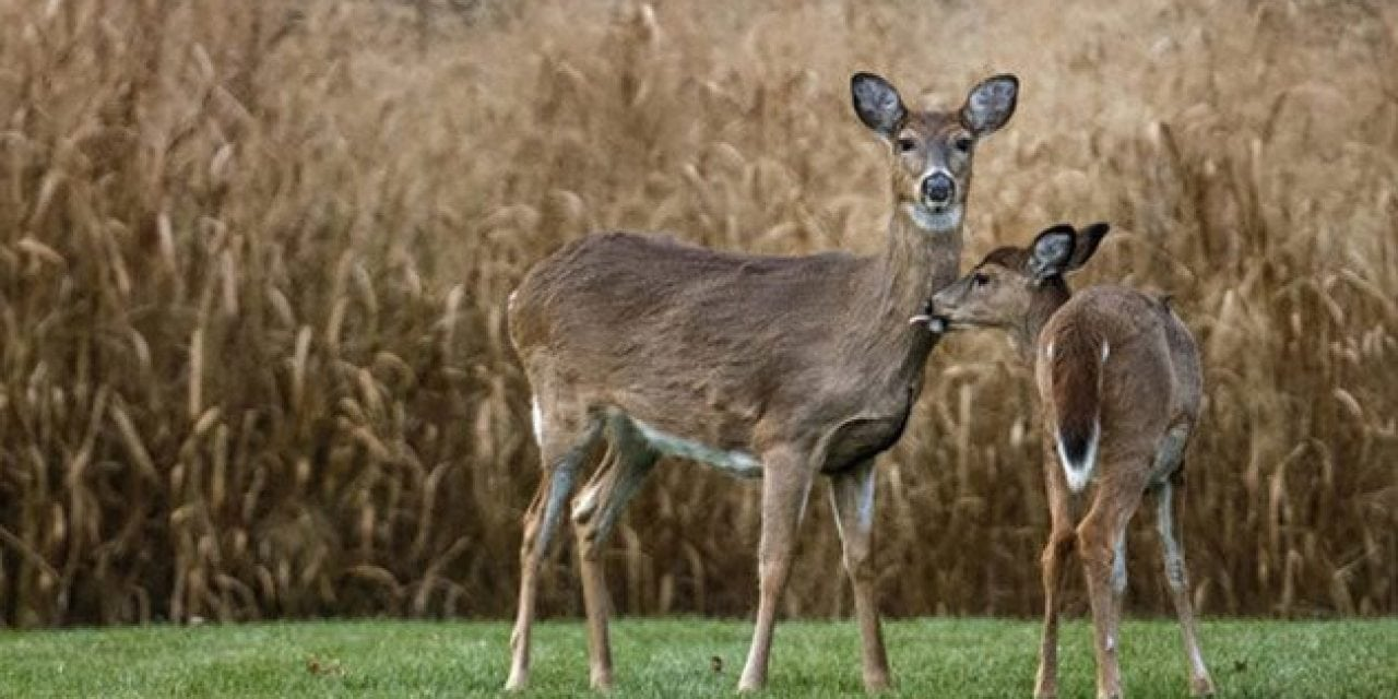 Missouri Becomes the Latest State to Expand CWD Regulations