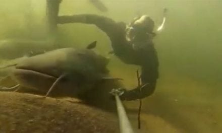 Snorkeler Swims With Some Larger-Than-Life Catfish