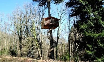 The 12 Best Tree Houses You Can Actually Stay In